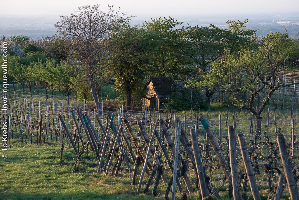 Cabane des les vignes…