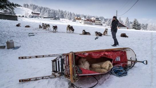Le musher et ses chiens de traîneau se reposent entre deux courses…