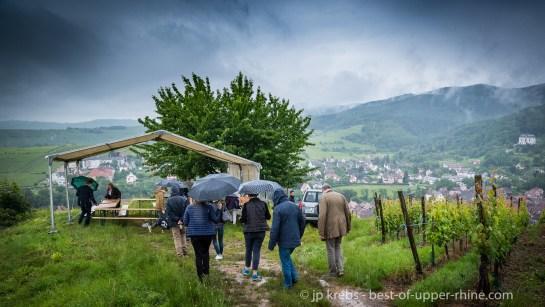 Sur les hauteurs du Kirchberg à Ribeauvillé