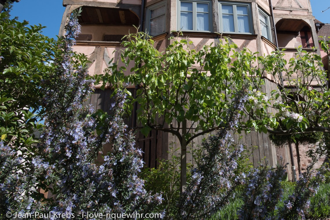 le rempart de 1291 vu du jardin fleuri.