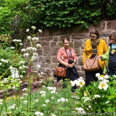 Présentation des herbes et plantes de l'époque médiévale au château du Haut-Koenigsbourg