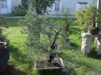 2002 - CHEZ PONS - 036