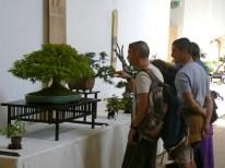 2010 -expo saint remi - 015