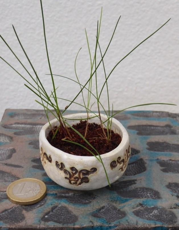 shitakusa d'herbe
