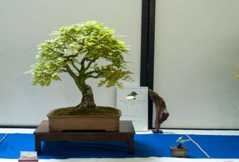 Oak, Qercus robur by Per Andersen. Awarded with the prize of the audience.