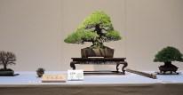 Kokufu Ten 2013 JS (42)