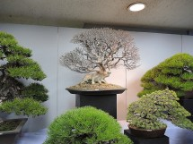 Kokufu Ten 2013 JS (7)