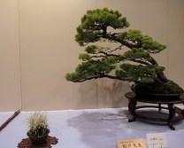 Kokufu Ten 2013 JS (81)
