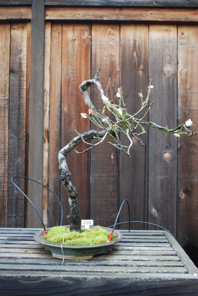Bc5dde30 A398 4889 Bbd6 Bonsai Garden At Lake Merritt
