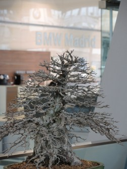 bonsai and bmw