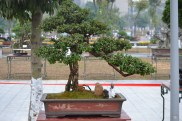 Guangzhou penjingi exposition 020