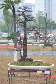 Guangzhou penjingi exposition- 1st prize winners 004