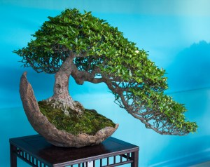 Bonsai Total Care