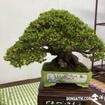 [展覽]2020雅風展(3).美樹分享