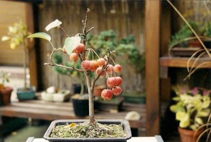 Apfel - 1999-11