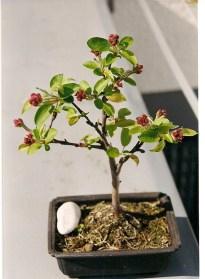 Apfel 2000, April