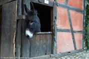A l'écomusée d'Alsace, il y a de vrais animaux, pour la plus grande joie des petits et des grands.