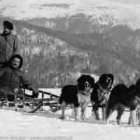1915 - 1918 - Avec les chiens de traîneau dans les Vosges (2)