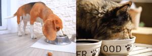 Echantillon Physio Pet Food