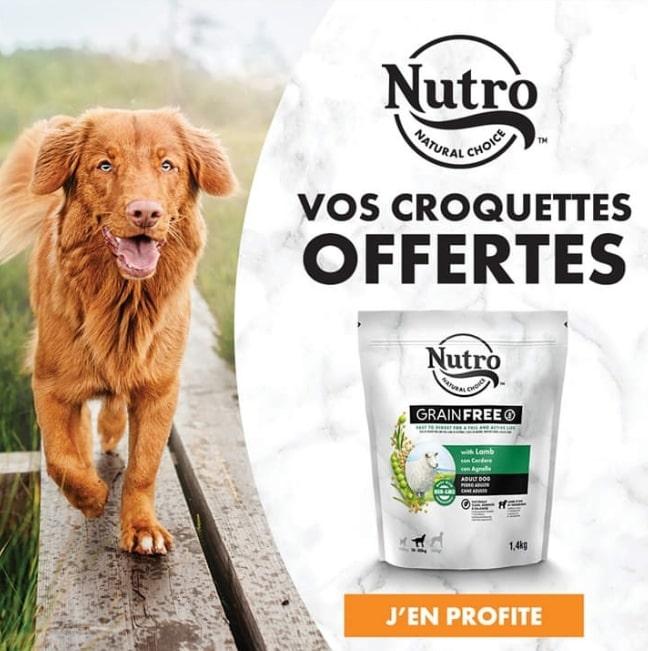Read more about the article Un bon d'achat de 18€ offert pour des croquettes Nutro