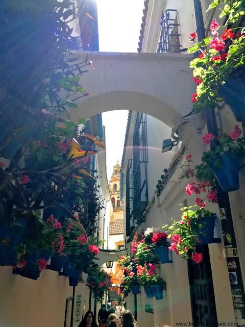 Calleja-de-las-Flores
