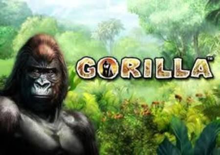 Gorilla – istražite džunglu i osvojite značajne bonuse!
