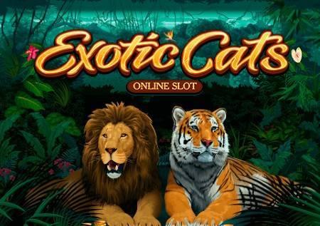 Exotic Cats– divlje mačke i džungla će vas očarati!