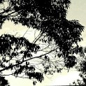 Tree brush strokes against the sky x