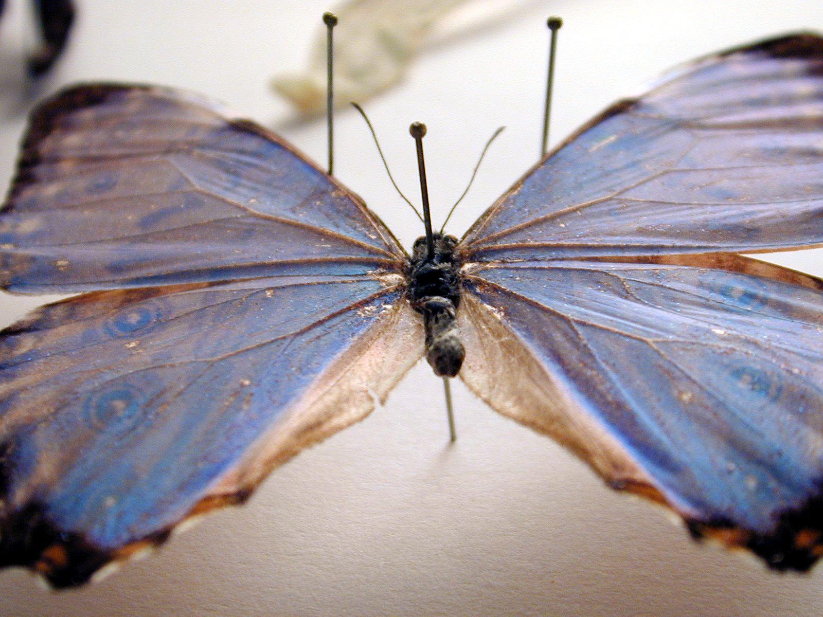 b1butterfly011.jpg