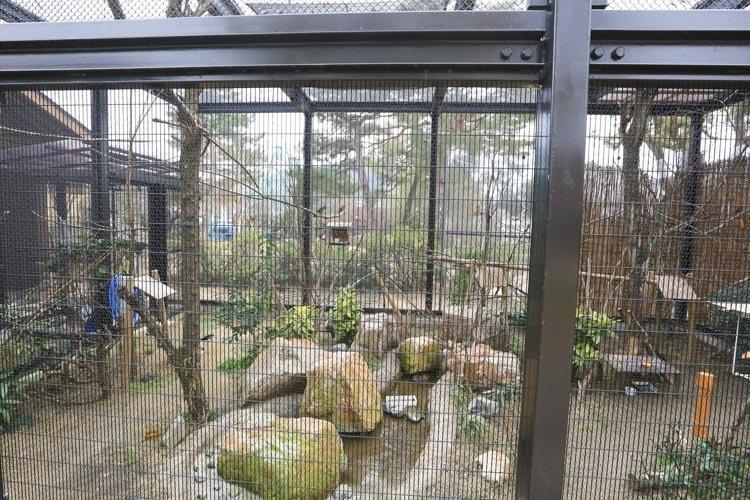 京都 動物園 (24 - 78)