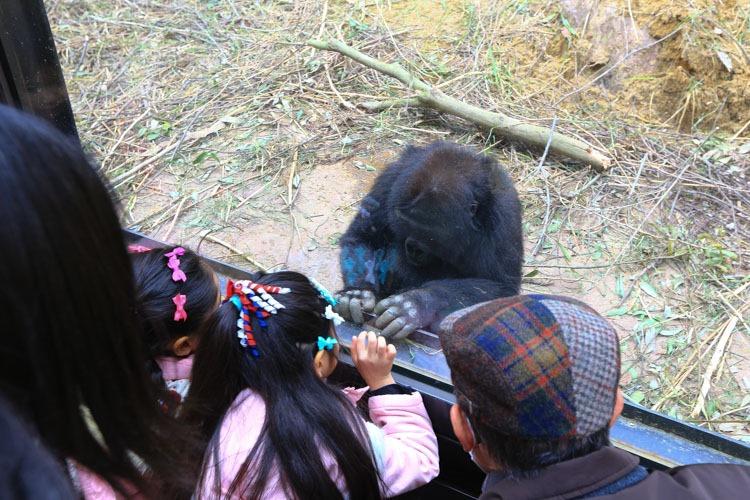 京都 動物園 (31 - 78)