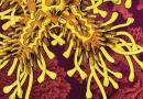 Rosewater Insurrection de Tade Thompson :  afrofuturisme 2