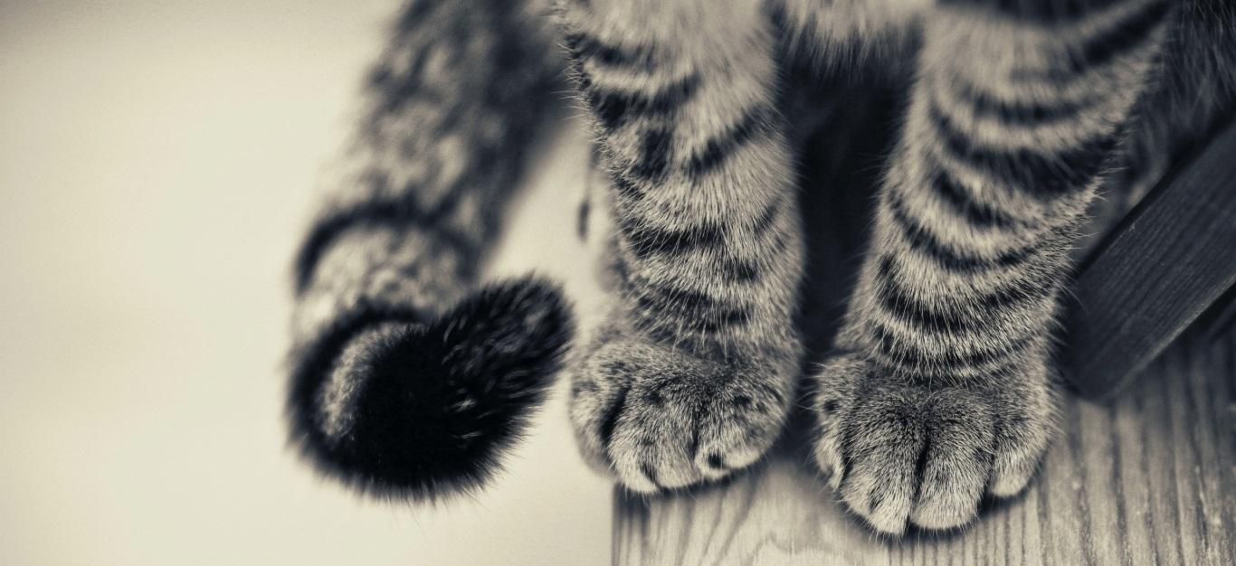 """Кот   """"Мир За Окном"""". Короткие рассказы, притчи, истории"""