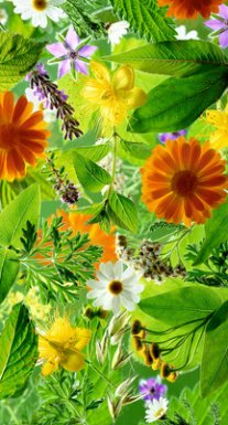 cs_188 herbs_carolsharp