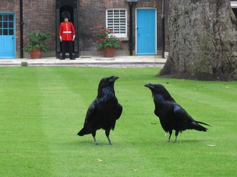 London_tower_ravens