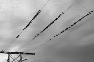bords-on-wires
