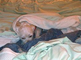 tilda in bed