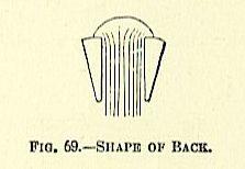 shape of back