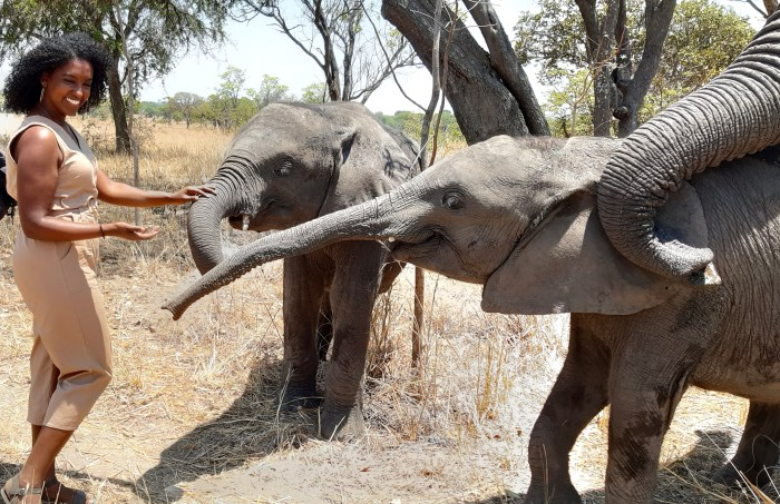 Black woman playing with elephants on sabbatical in Zambia