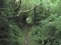 Pembrokeshire footpath
