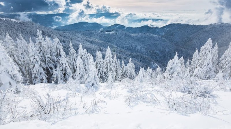 The Black Forest in Germany, setting for Twelve Nights, an atmospheric novel by Urs Faes