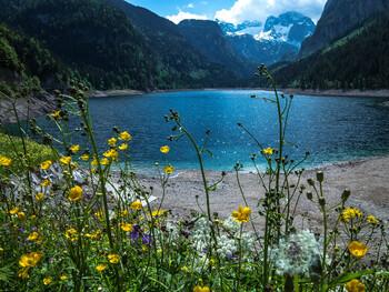 Канцлер Австрии посоветовал согражданам не рассчитывать на летний отпуск за границей
