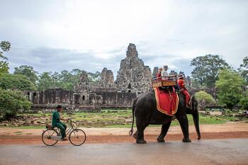 В туристической провинции Камбоджи запретили употреблять в пищу мясо собак
