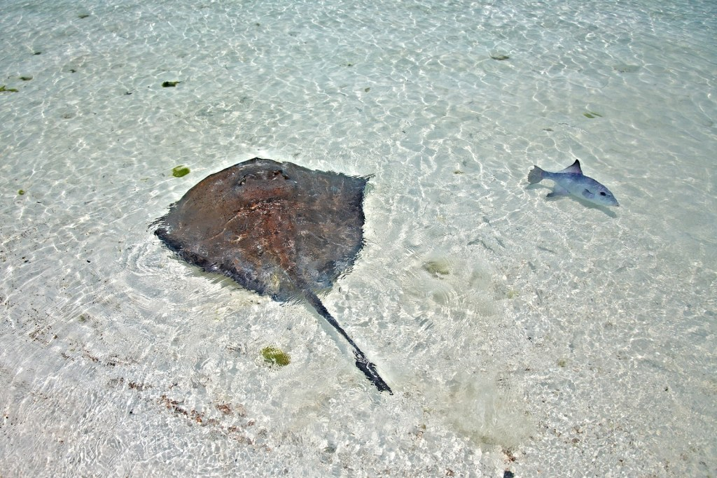 stingray by Booking Express Travel