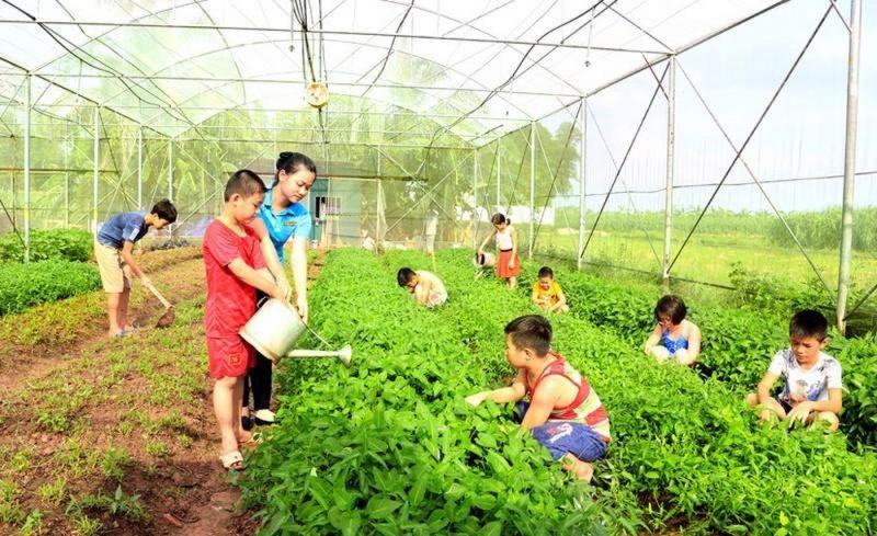 trồng rau tại eco farm