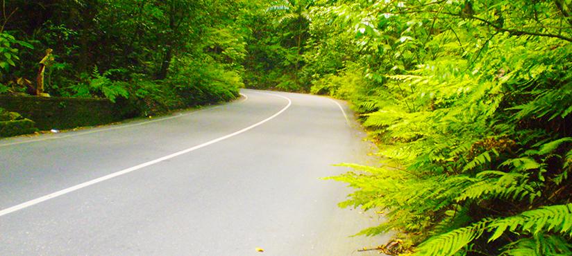 Fern Gully | Book Jamaica Excursions | bookjamaicaexcursions.com | Karandas Tours