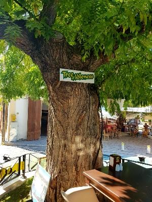 TREE OF IDLENESS