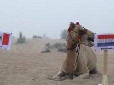 Верблюд ставит на Нидерланды