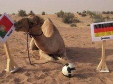 Ставь на Германию, если не верблюд