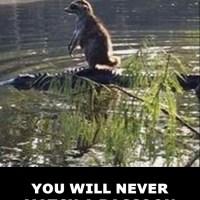 Reality Check: The Bad Ass Raccoon Meme